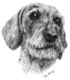 Wirehaired Dachshund Compliment Slips